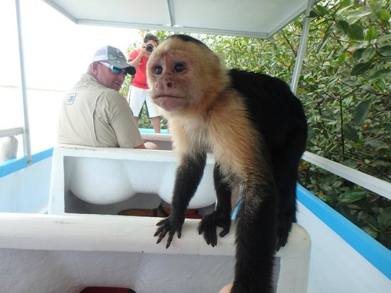 monkey-tour-costa-rica