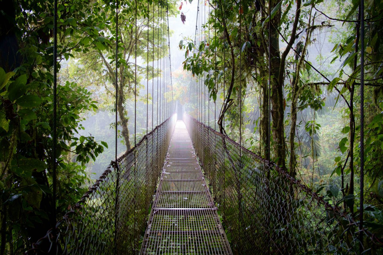 Arenal-Hanging-Bridges-Tour-Operators-Costa-Rica-01