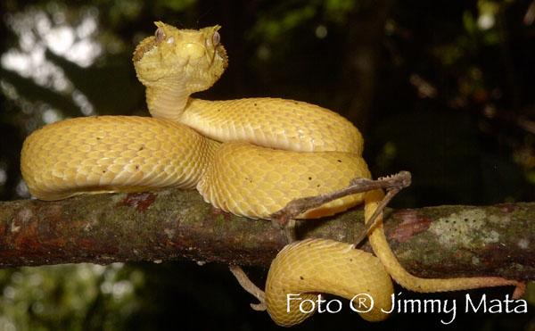 Arenal-Natura-Tour-Operators-Costa-Rica-03