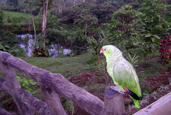 Arenal-Natura-Tour-Operators-Costa-Rica-06