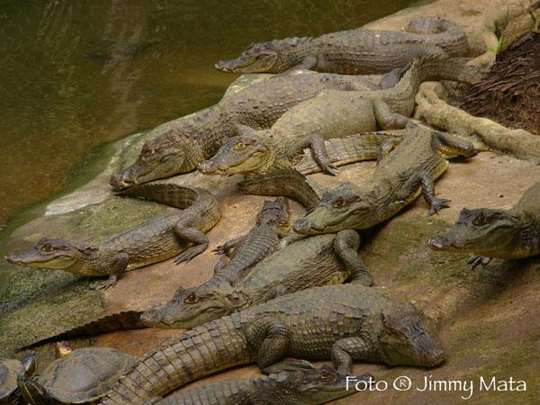 Arenal-Natura-Tour-Operators-Costa-Rica-09