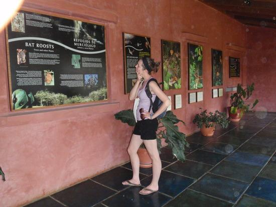 Bat-Jungle-Tour-Monteverde-Tour-Operators-Costa-Rica-01