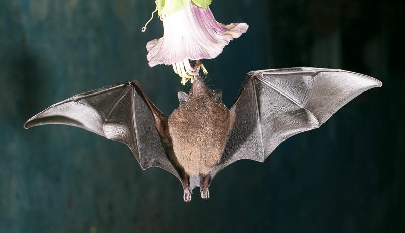 Bat-Jungle-Tour-Monteverde-Tour-Operators-Costa-Rica-03