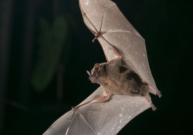 Bat-Jungle-Tour-Monteverde-Tour-Operators-Costa-Rica-05