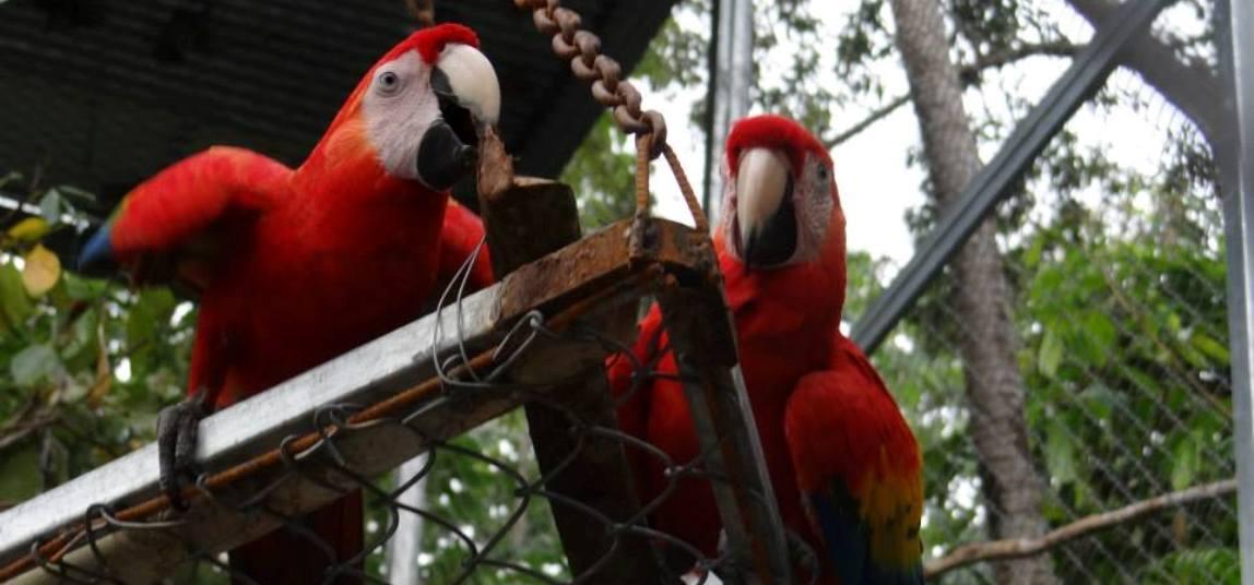 Gaia-Hotel-Reserve-Tour-Operators-Costa-Rica-04