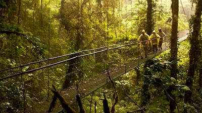 Monteverde Cloud Forest Tour