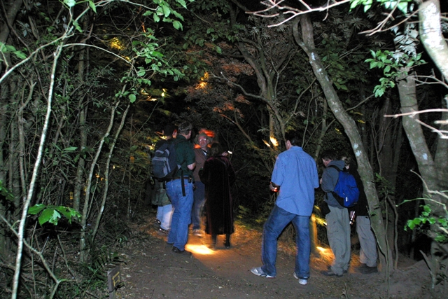 Monteverde-Night-Tour-Tour-Operators-Costa-Rica-02
