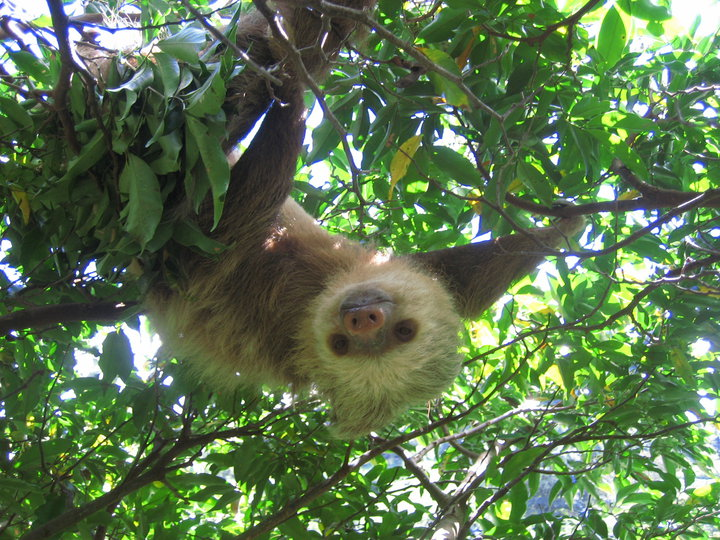 Trapiche-Tour-Monteverde-Tour-Operators-Costa-Rica-06