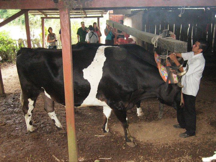 Trapiche-Tour-Monteverde-Tour-Operators-Costa-Rica-07