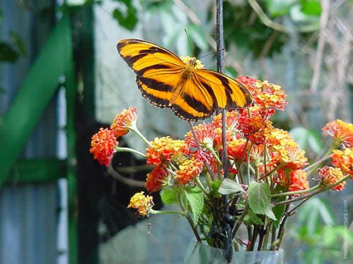 Butterfly-Farm-Monteverde-Costa-Rica-1