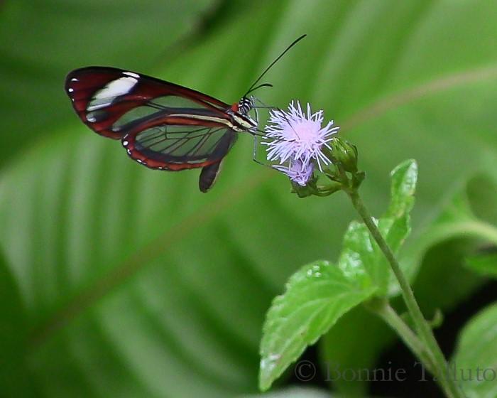 Butterfly-Farm-Monteverde-Costa-Rica-2