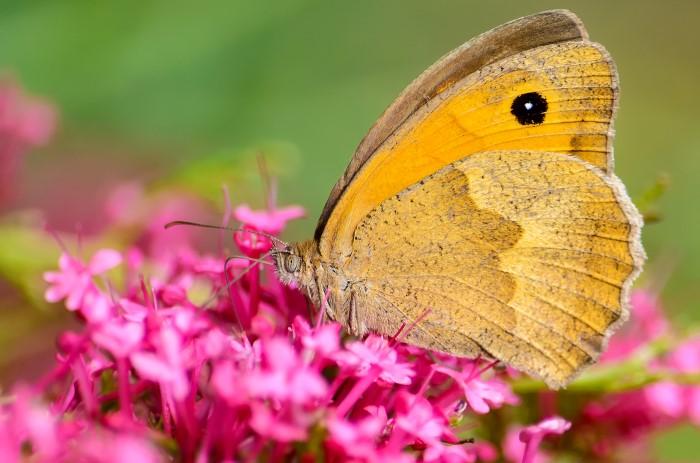 Butterfly-Farm-Monteverde-Costa-Rica-3