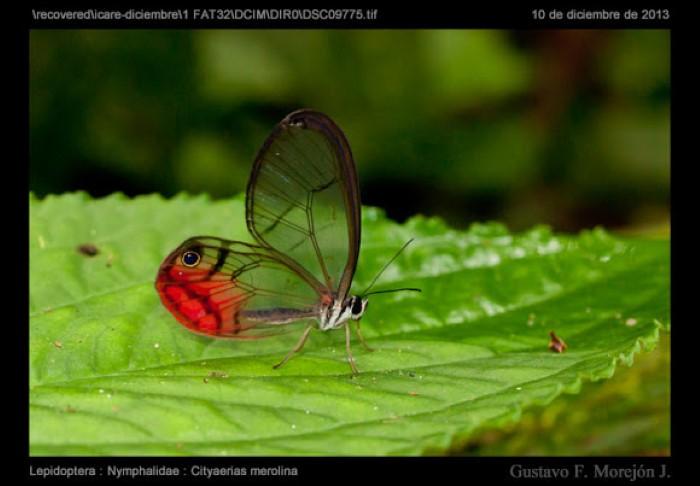 Butterfly-Farm-Monteverde-Costa-Rica-5