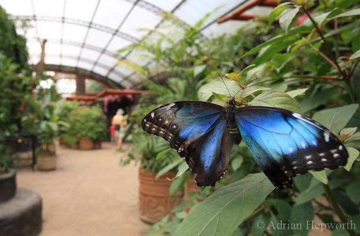 Butterfly-Farm-Monteverde-Costa-Rica-6