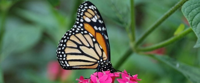 Butterfly-Farm-Monteverde-Costa-Rica-7