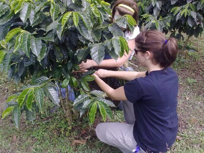 Don-Juan-Coffee-tour-Costa-Rica-1