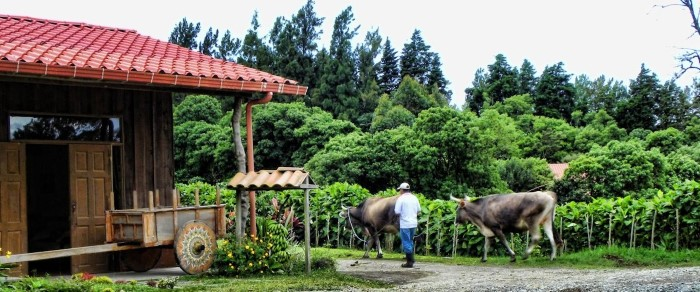 Don-Juan-Coffee-tour-Costa-Rica-4