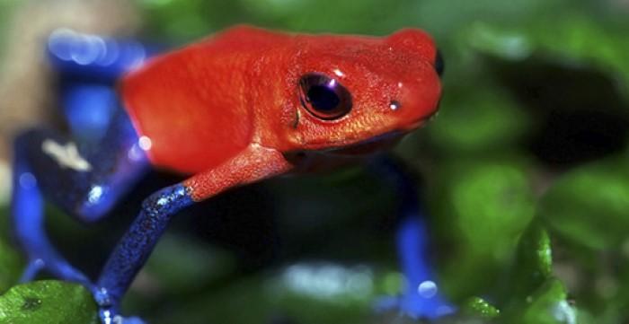 Frog-Pond-Monteverde-Costa-Rica-2