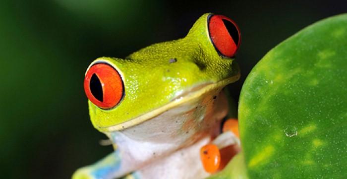 Frog-Pond-Monteverde-Costa-Rica-3