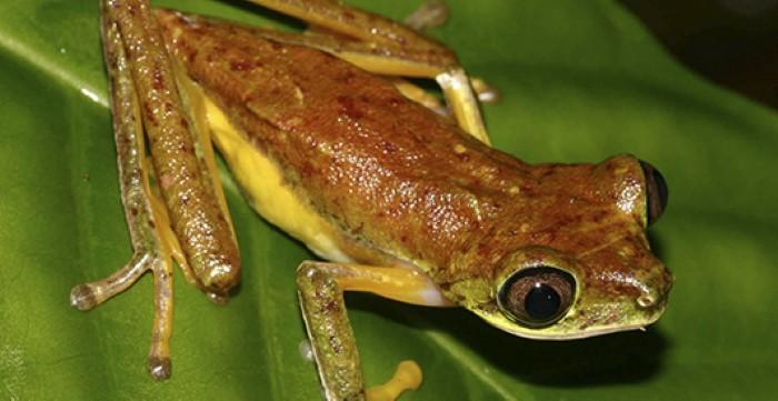 Frog-Pond-Monteverde-Costa-Rica-4