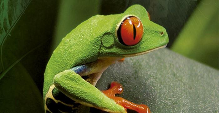 Frog-Pond-Monteverde-Costa-Rica-5