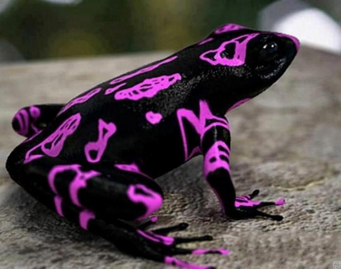 Frog-Pond-Monteverde-Costa-Rica-7