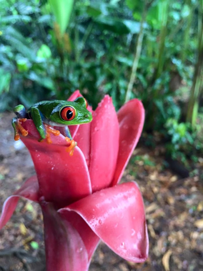 Frogs-Heaven-Tour-Costa-Rica-9