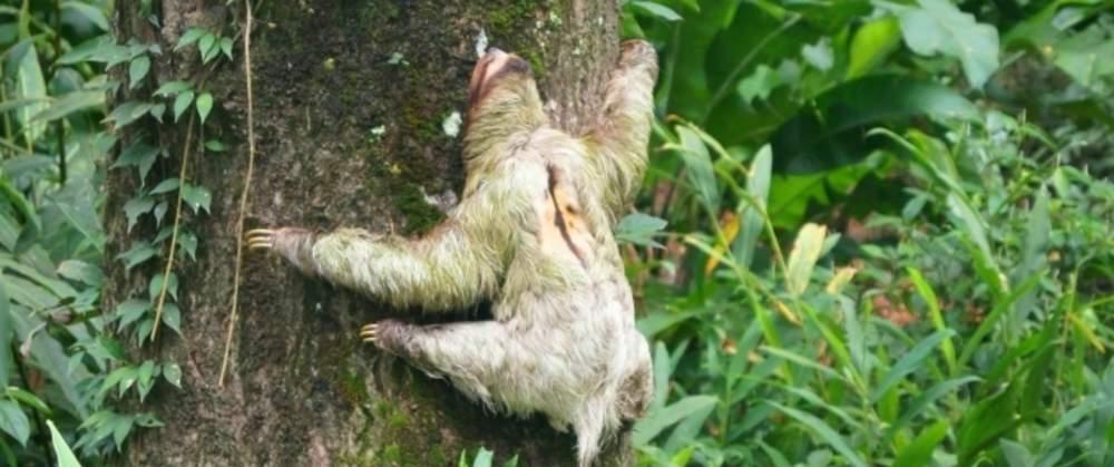 Gandoca-Manzanillo-Refuge-Jungle-Hike-Costa-Rica-6