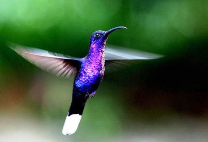 Hummingbird-Garden-Monteverde-Costa-Rica-04