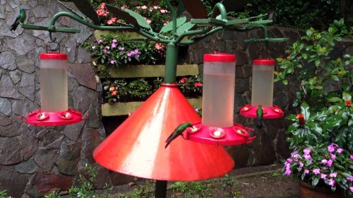 Hummingbird-Garden-Monteverde-Costa-Rica-08