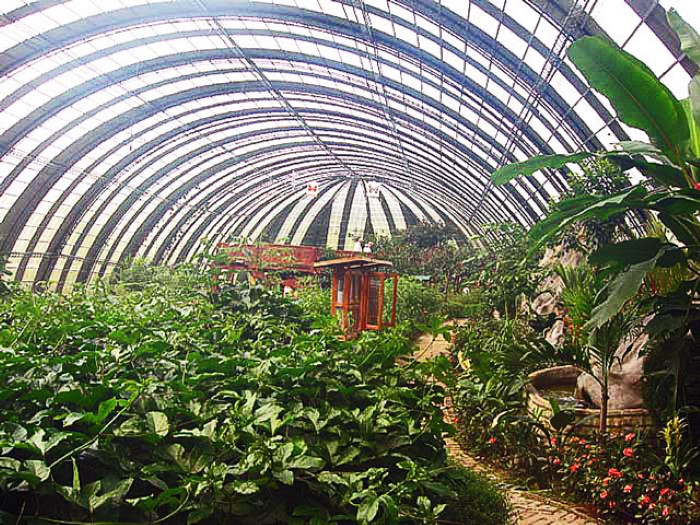 Hummingbird-Garden-Monteverde-Costa-Rica-09