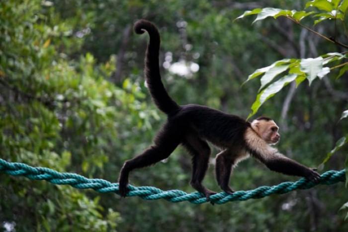 Mangrove-tours-Costa-Rica-1