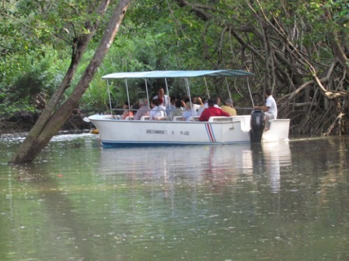 Mangrove-tours-Costa-Rica-6
