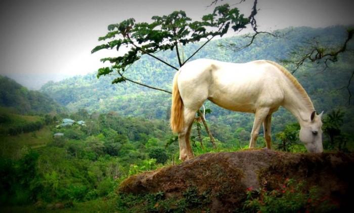 Hotel-Lands-in-love-Costa-Rica-4