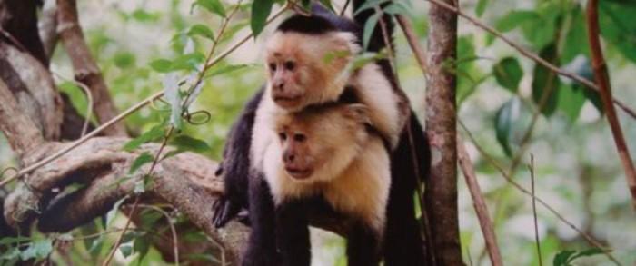 Santa-Rosa-National-Park-Liberia-City-Tour-Costa-Rica-5
