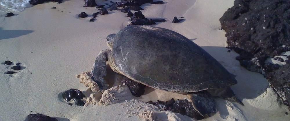 Turtle-Nesting-Night-Tour-Costa-Rica-3