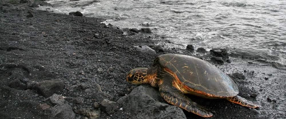 Turtle-Nesting-Night-Tour-Costa-Rica-4