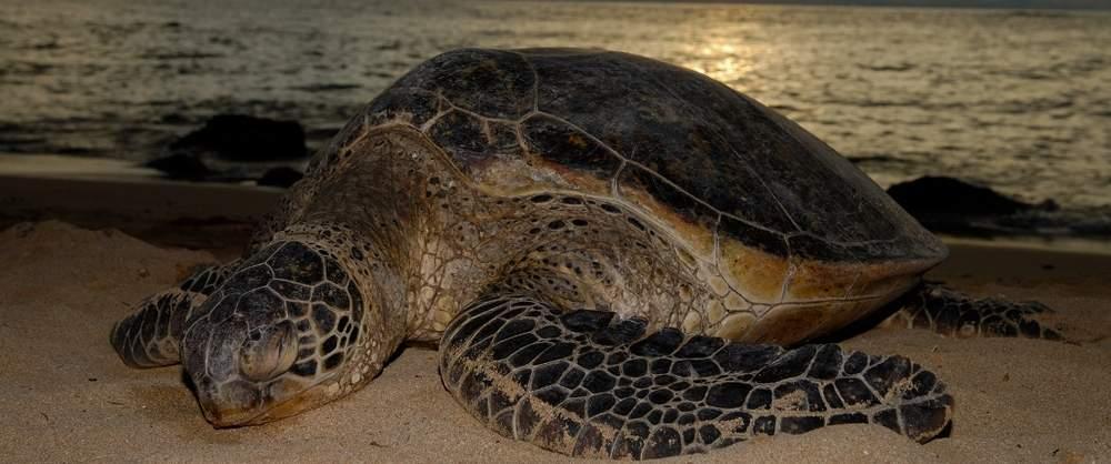 Turtle-Nesting-Night-Tour-Costa-Rica-5