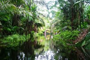 canals-tortuguero-costa-rica