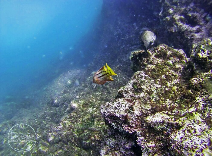 Diving in Costa Rica by Dani La Viola